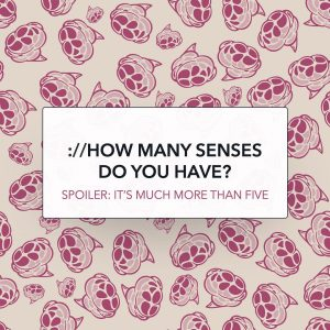how many senses do you have?